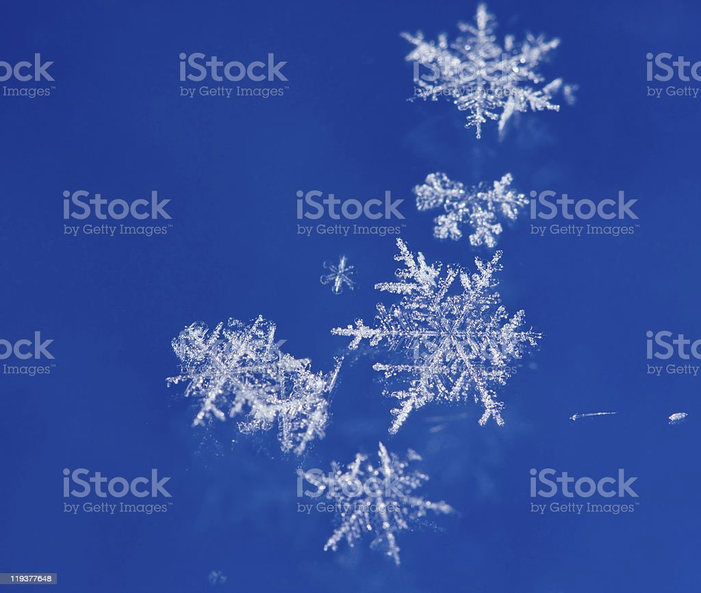 Natural snowflakes royalty-free stock photo