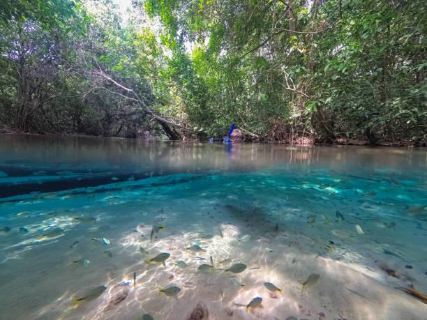 Natürliches Spa, gespeist von einem kristallklaren Frühling, Reflexionen und tropischen Fischen im brasilianischen Regenwald, Bom Jardim Mato Grosso – Foto