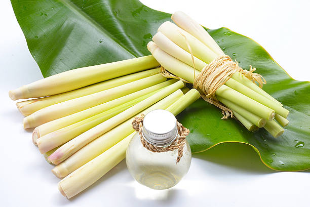 Natural Spa Ingredients Lemongrass essential Oil with Aromatherapy stock photo