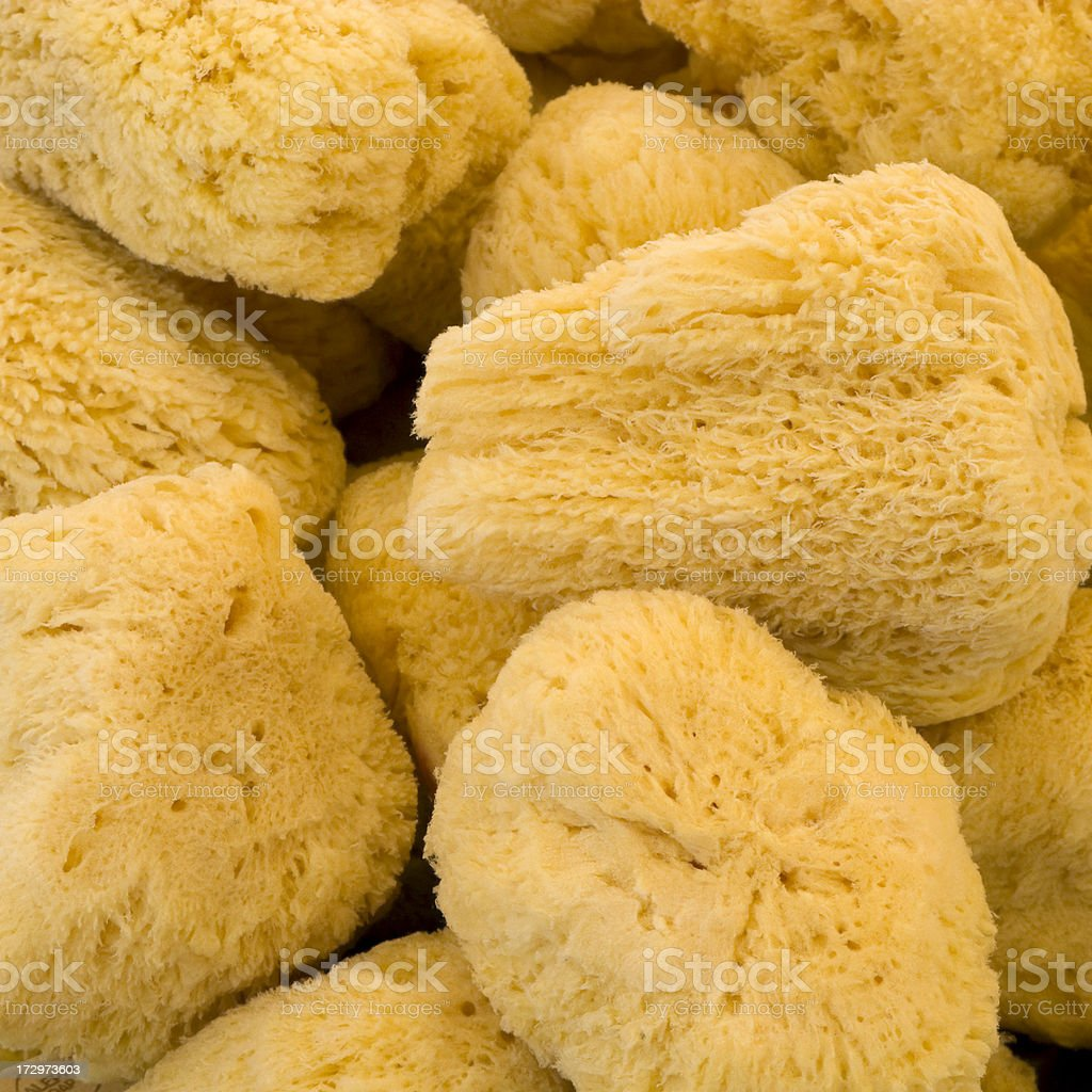 Natural sponges royalty-free stock photo