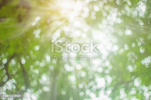 1067054470istockphoto Natural spring blurred green leaves background. Create light soft blurred colors in bright sunshine. Green bokeh abstract glitter light background. Focus texture from nature forest fresh shiny growth. 1192012592