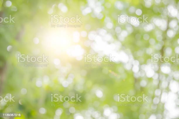 Photo of Natural spring blurred green leaves background.