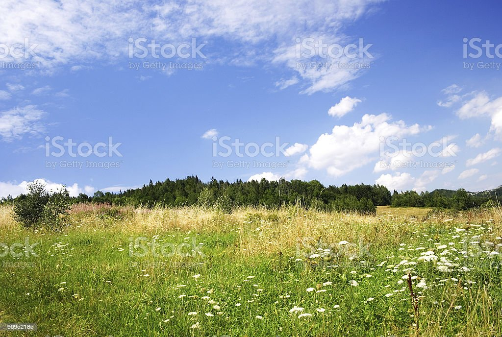 Natural Spring Landscape royalty-free stock photo