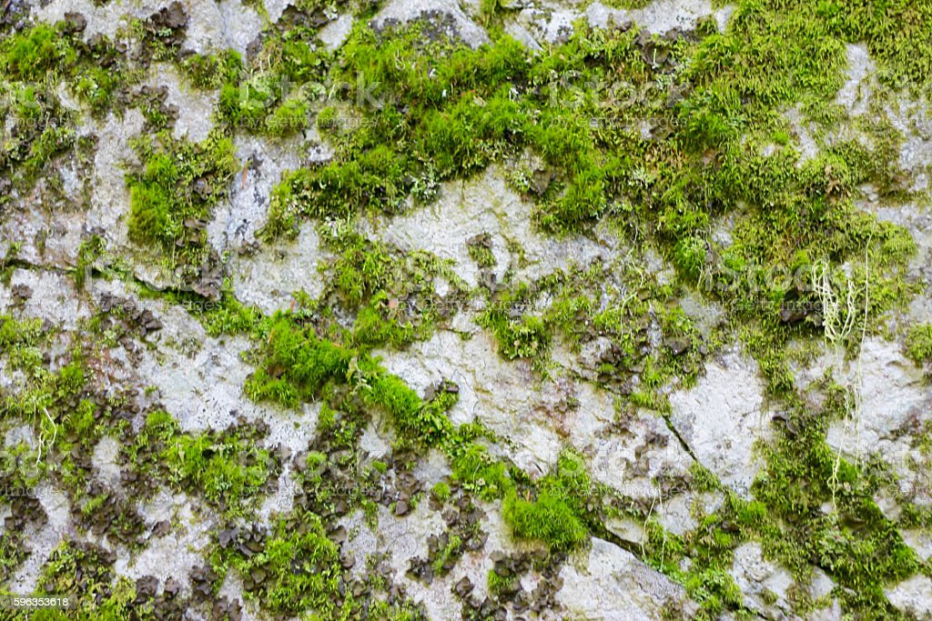 Natural stone background texture with green moss royalty-free stock photo
