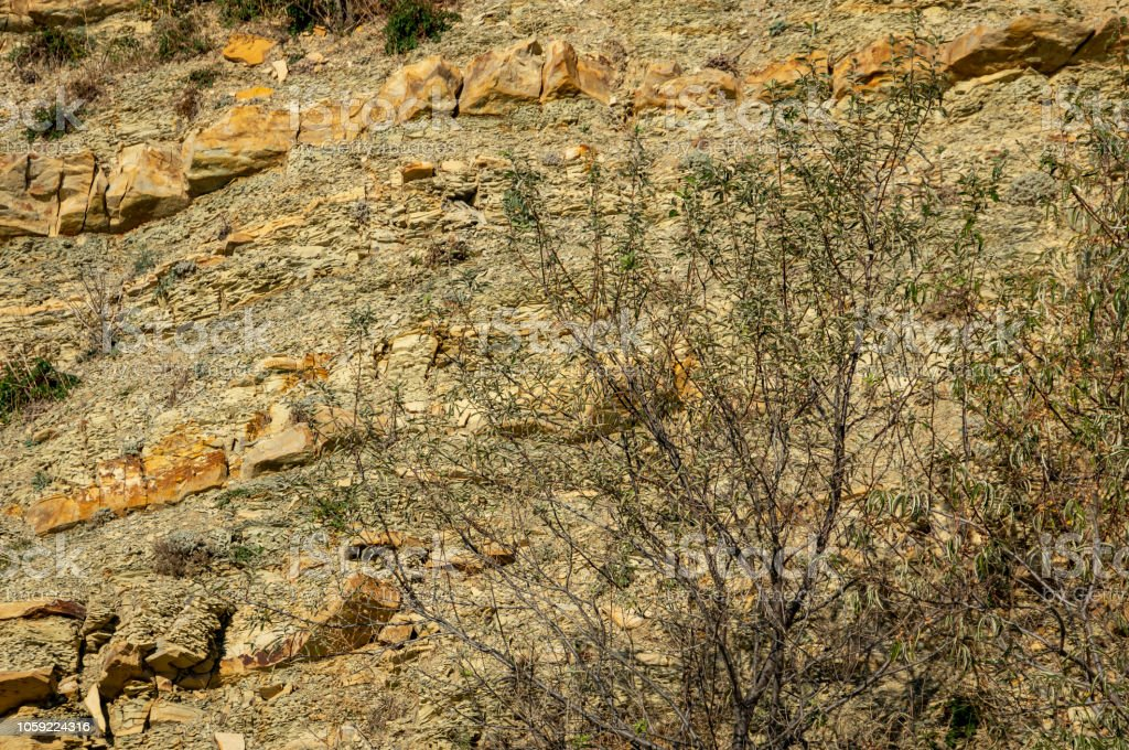 Natural stones and fragments of rocks with graceful plants on the...