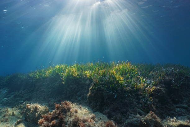 Natural sunbeams underwater in Mediterranean sea Natural sunbeams underwater through water surface in the Mediterranean sea on a seabed with neptune grass, Catalonia, Roses, Costa Brava, Spain mediterranean sea stock pictures, royalty-free photos & images