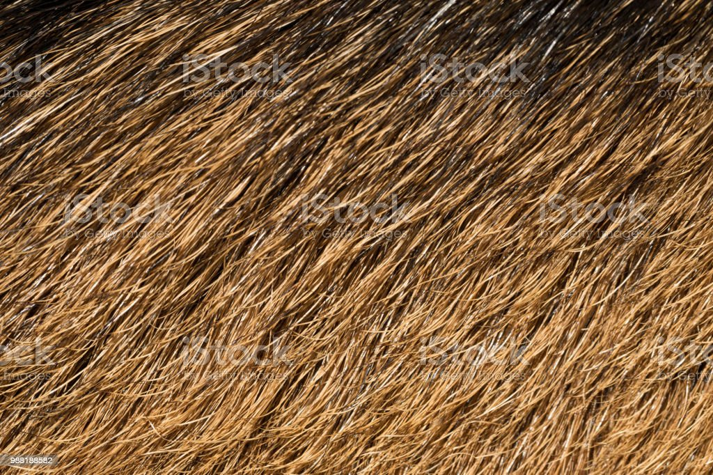Natural background. The natural texture of wild deer skins....