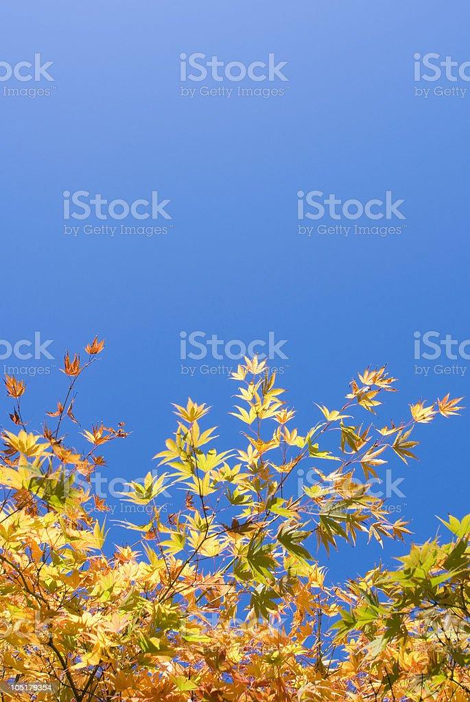 Natural textures royalty-free stock photo