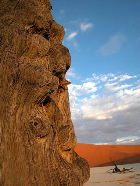 natural totem stock photo