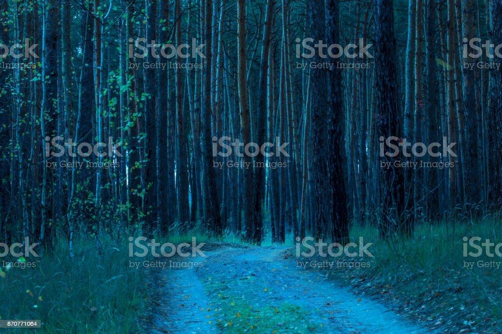 高い松の木につながる自然歩道バック グラウンド - ウクライナのロイヤリティフリーストックフォト