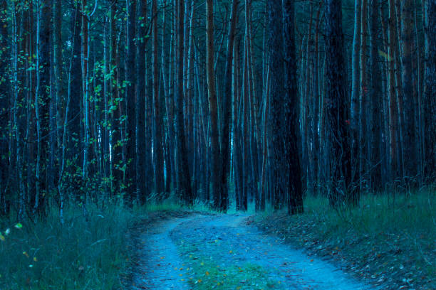 natural trail background leading to high pine trees stock photo