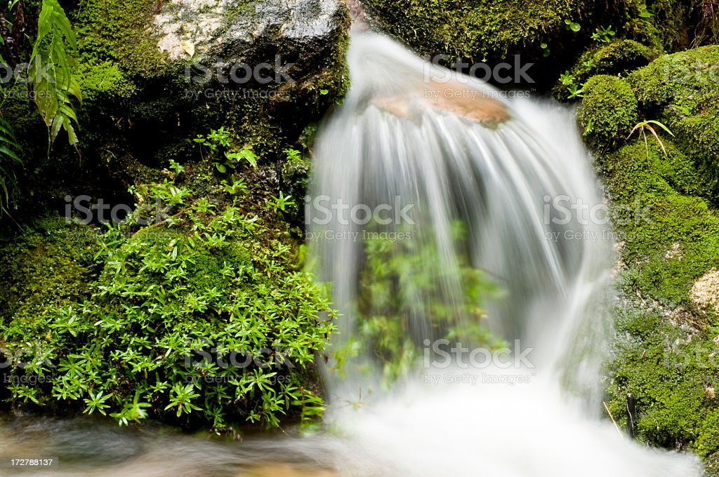 Natural Tranquility royalty-free stock photo