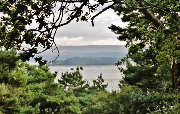 Natural Tree Frame stock photo