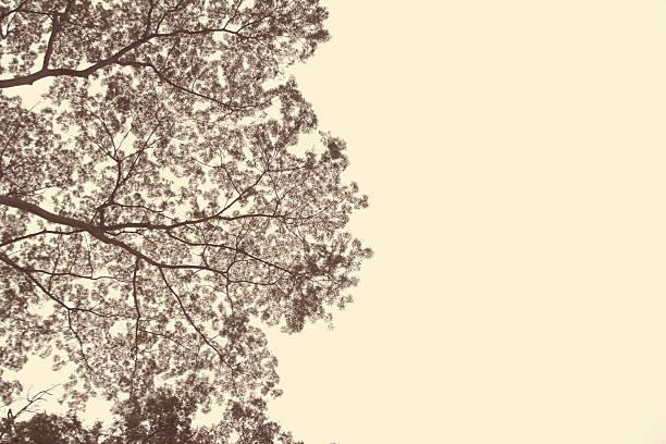 Natural tree neutral background image picture id450605131?b=1&k=6&m=450605131&s=612x612&w=0&h=nhygdmjhtgvpnfexlfea9hvclxj3iofgugusvch24gc=