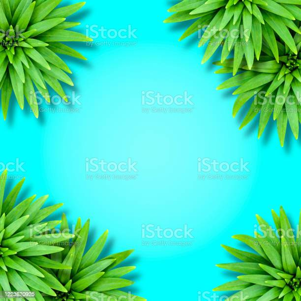 Natural tropical background from lily leaves on an aquamarine basis picture id1223620925?b=1&k=6&m=1223620925&s=612x612&h=h3fxke5voyk6orby9xnrrenlf68nnw2c74axs3nhkke=