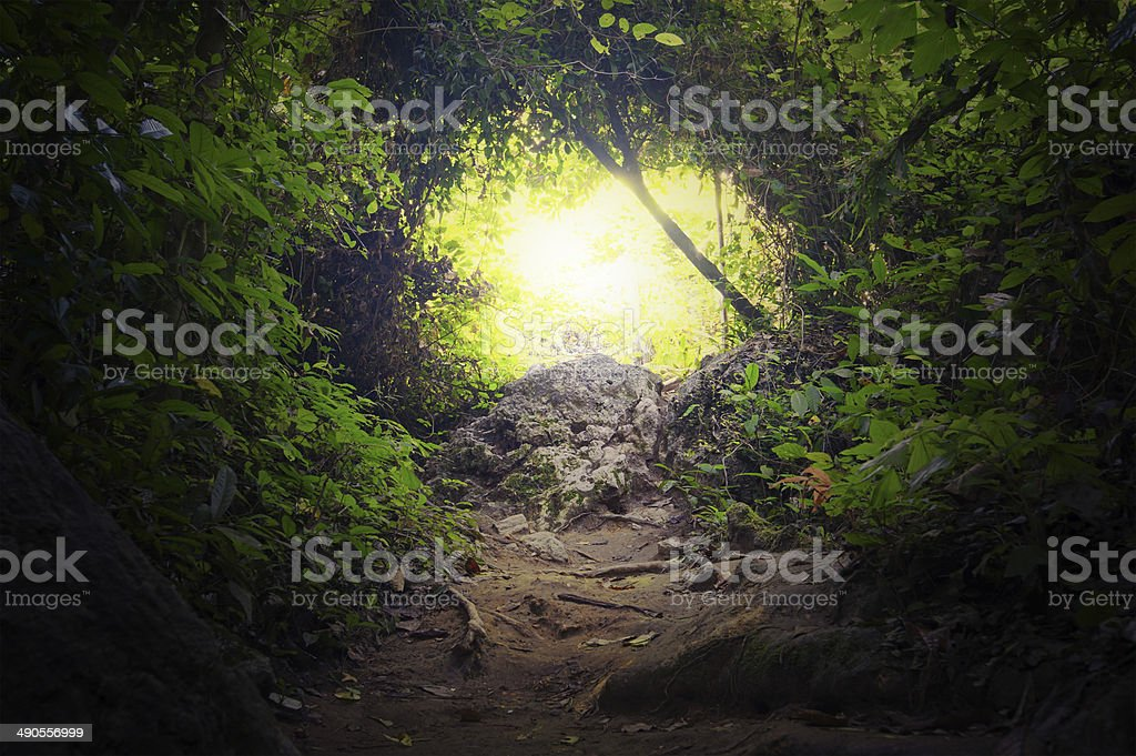 Natural tunnel in tropical jungle forest stock photo