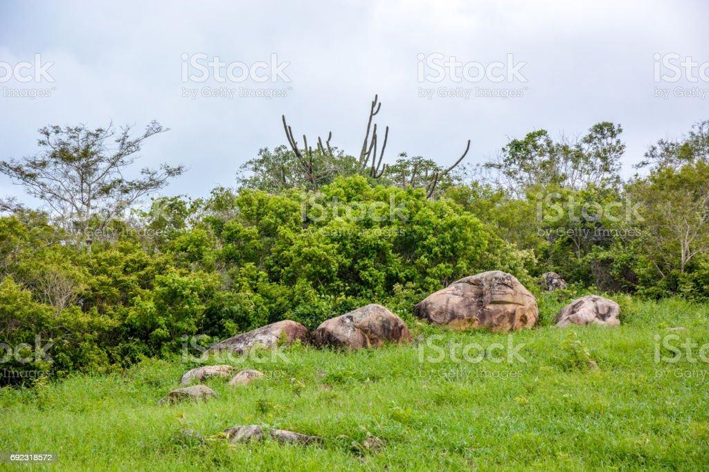 Natural vegetation of Agreste Pernambucano stock photo