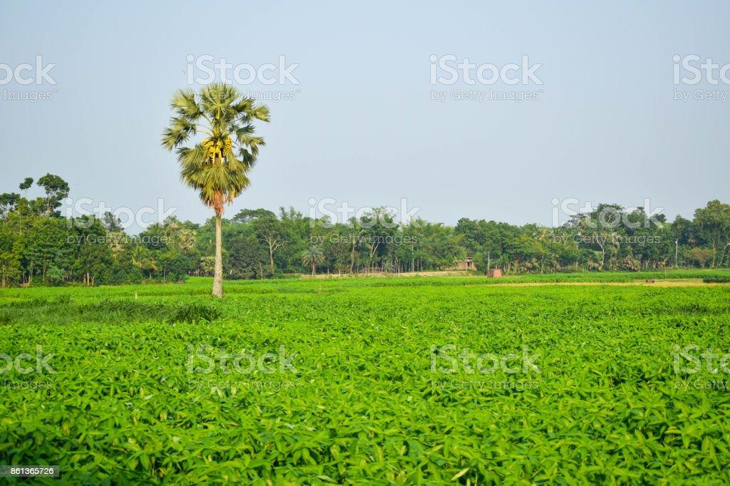 Natural view stock photo