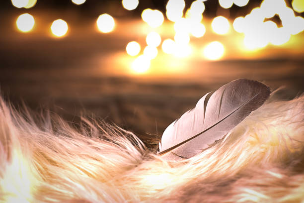 Natural white bird feather on white fur with bokeh light background stock photo
