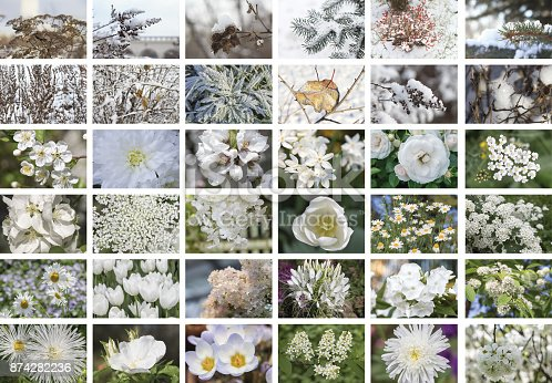 istock Natural white collage of plants, thirty-six elements, horizontal 874282236