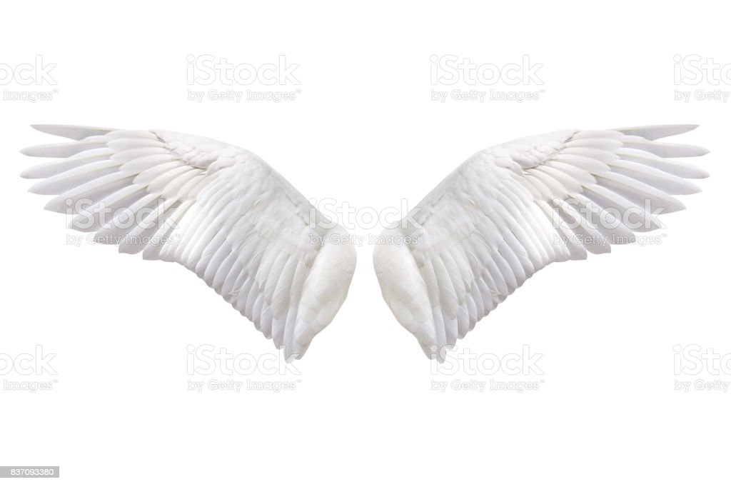 Natural wing stock photo