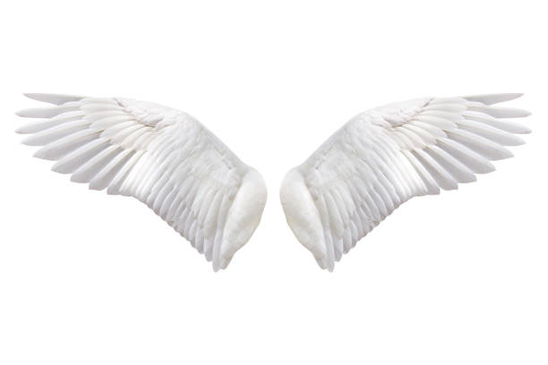 natural wing - animal wing stock photos and pictures