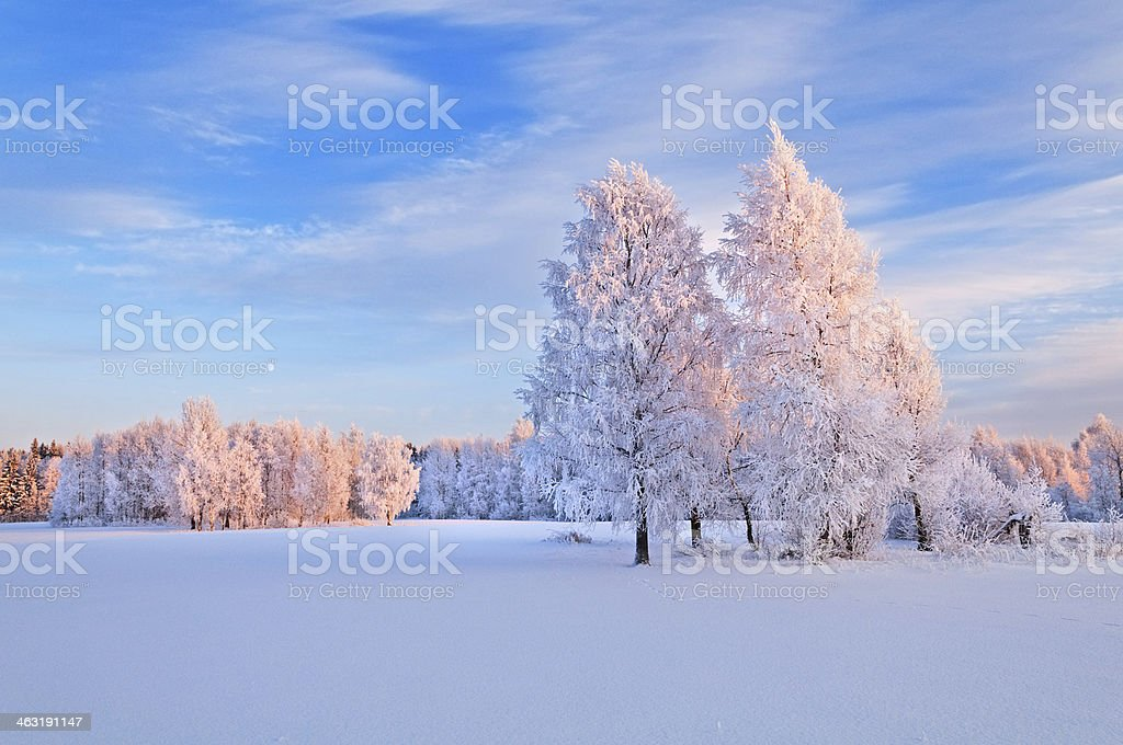 Natural winter background. stock photo