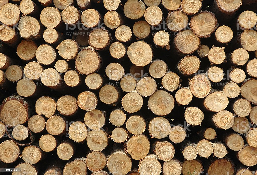natural wood royalty-free stock photo