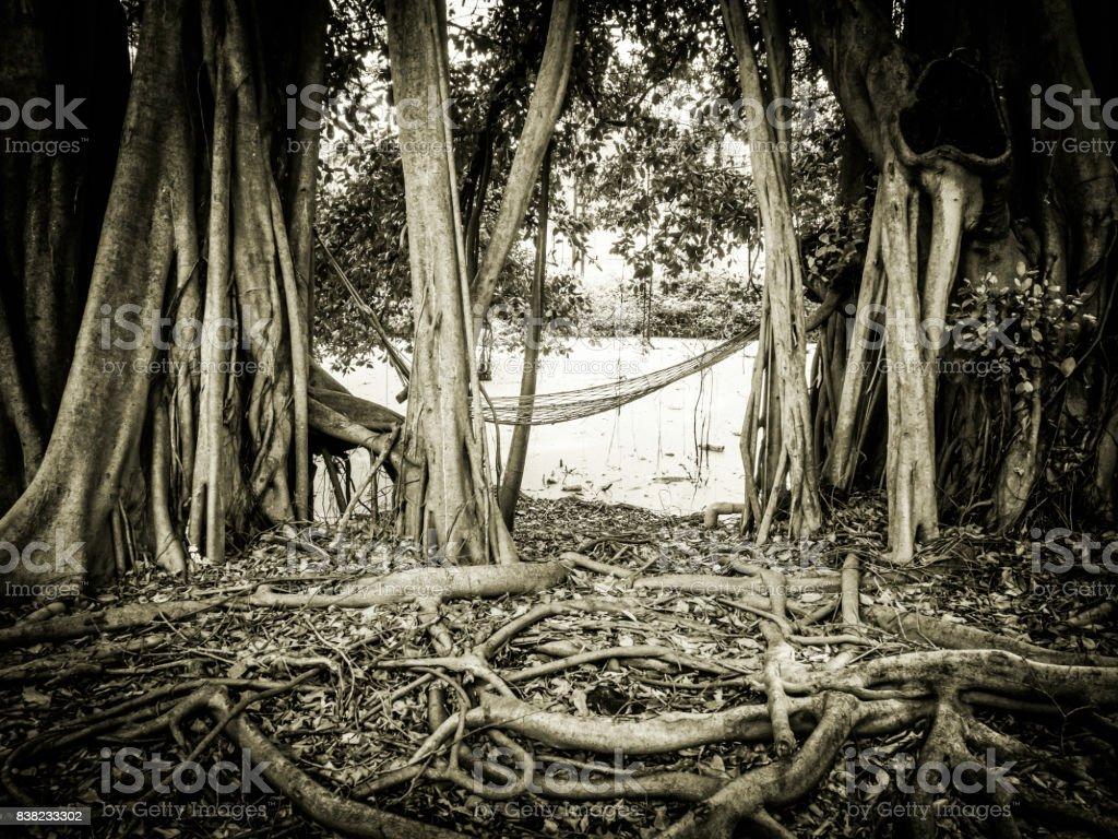 Natural wood roots