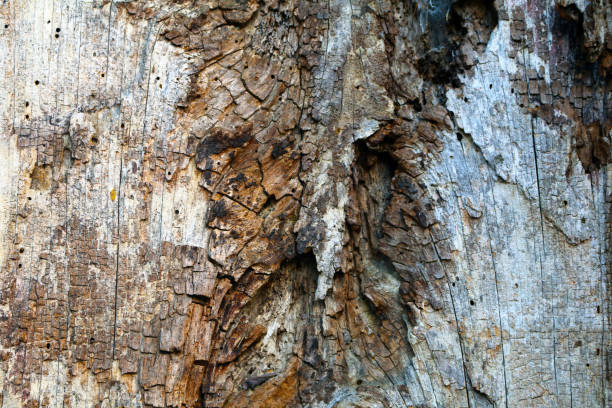natural wood tree bark shadows details close-up stock photo