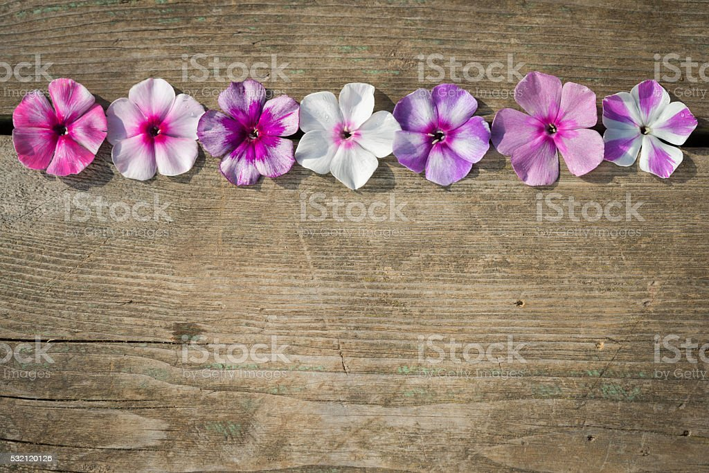 Natural wooden background with bright phlox flowers stock photo