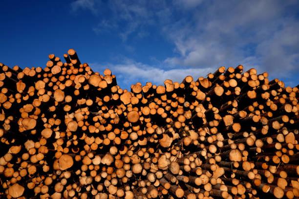 En bois naturel - Photo