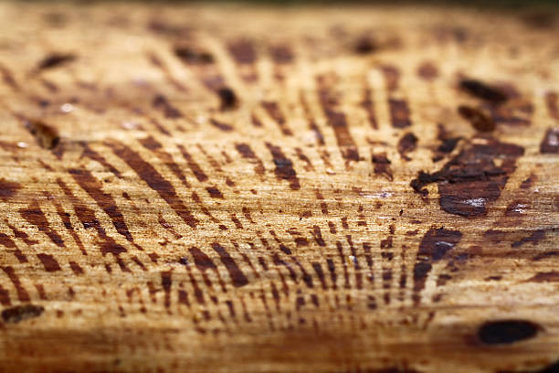 Natural wooden texture stock photo