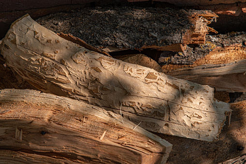 Rough wooden textures with fibrous structure and marks made by insect pests. Brown hardwood background with copy space