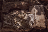 Knotted wood surface of uneven cracked woods in sunlight. Rough wooden texture of fibrous structure. Brown hardwood background with copy space