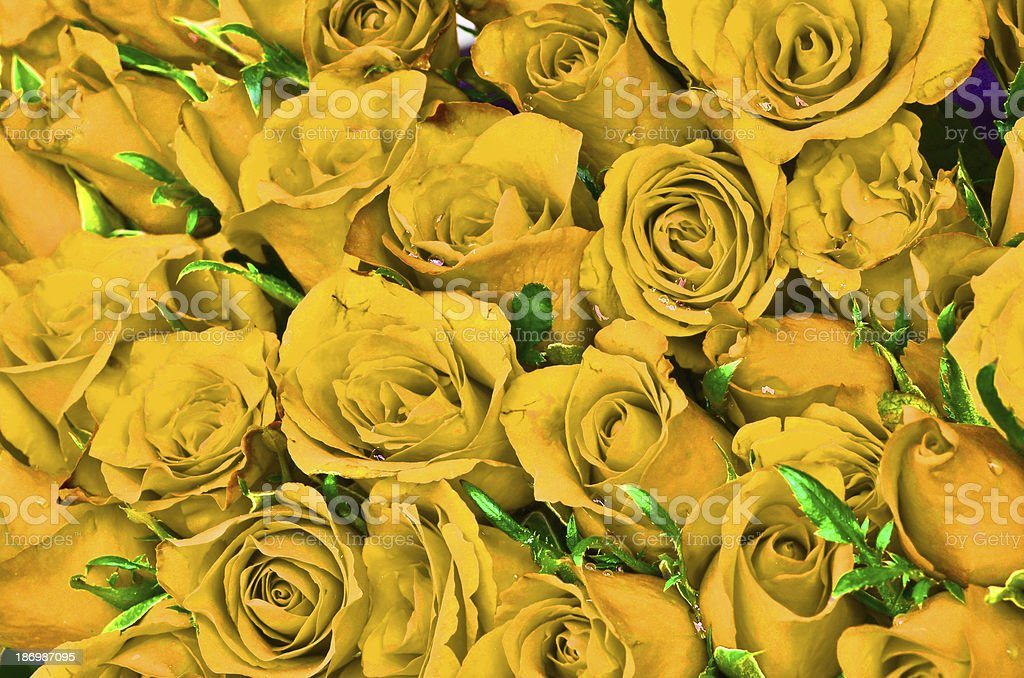 Natural yellow roses background royalty-free stock photo