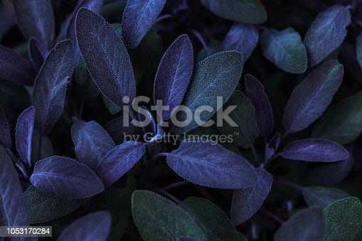 Art, leaf, backdrop, beauty in nature