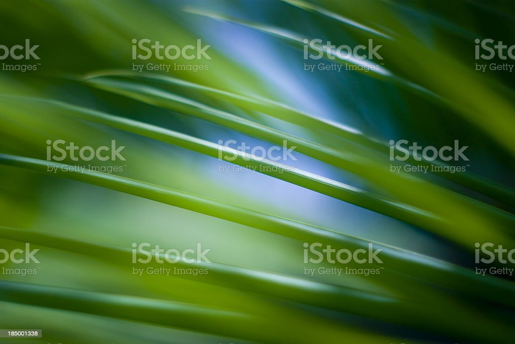 nature abstract close up of green palm leaves royalty-free stock photo