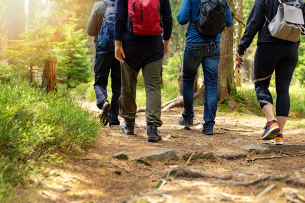nature adventures - group of friends walking in forest with backpacks stock photo