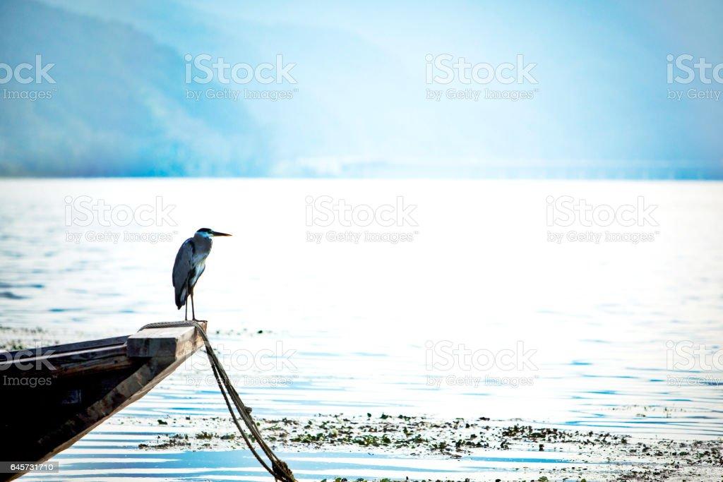 Nature and Bird stock photo