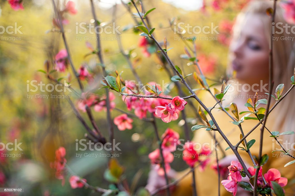 Nature and flowers foto de stock royalty-free