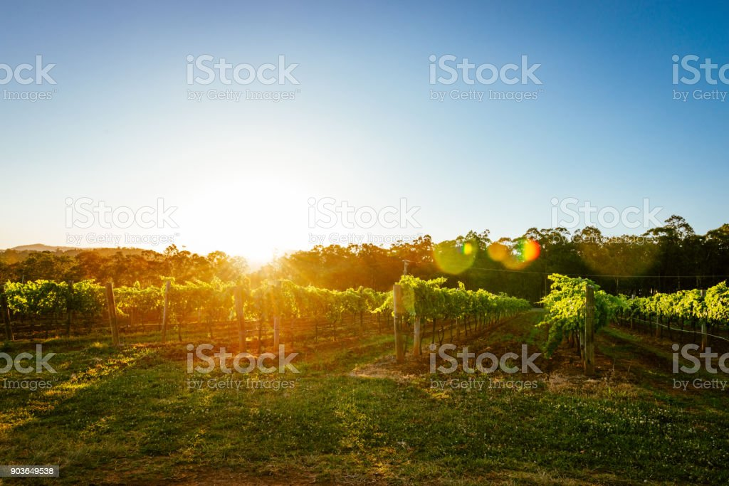 Nature and vineyards in summer stock photo