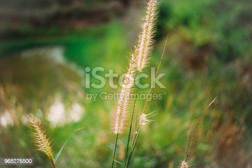 Nature Around The House - zdjęcia stockowe i więcej obrazów Bez ludzi