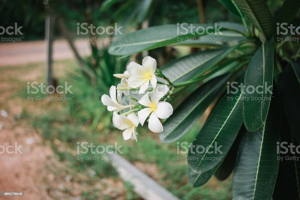 Nature Around The House royalty-free stock photo