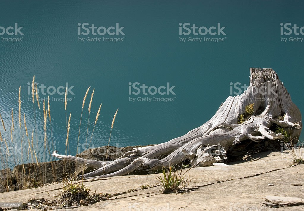 Nature art royalty-free stock photo