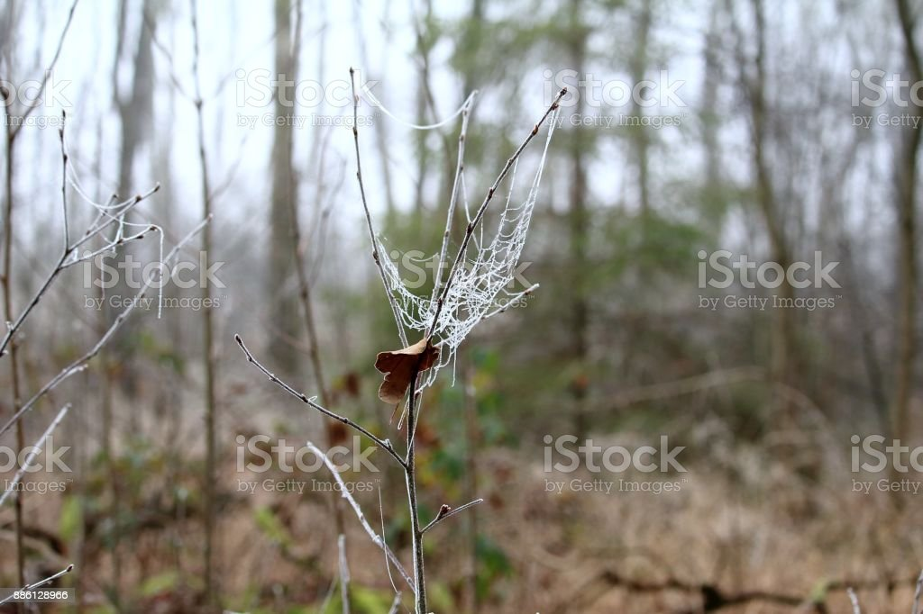 Natur Kunstwerk stock photo