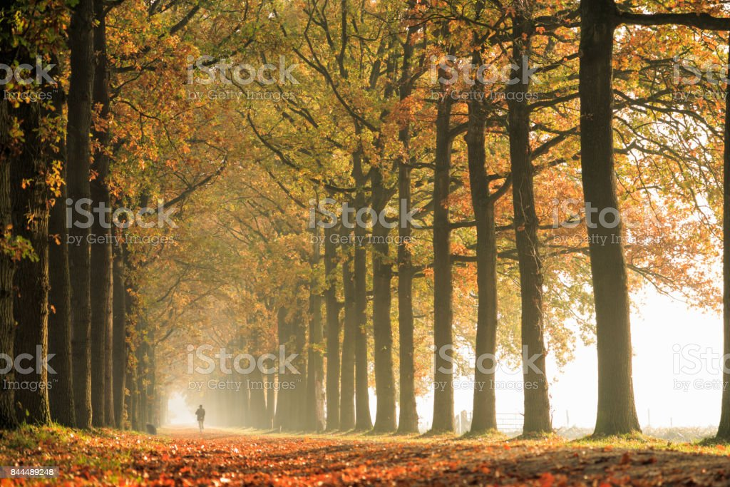 Nature: Autumn Forest stock photo