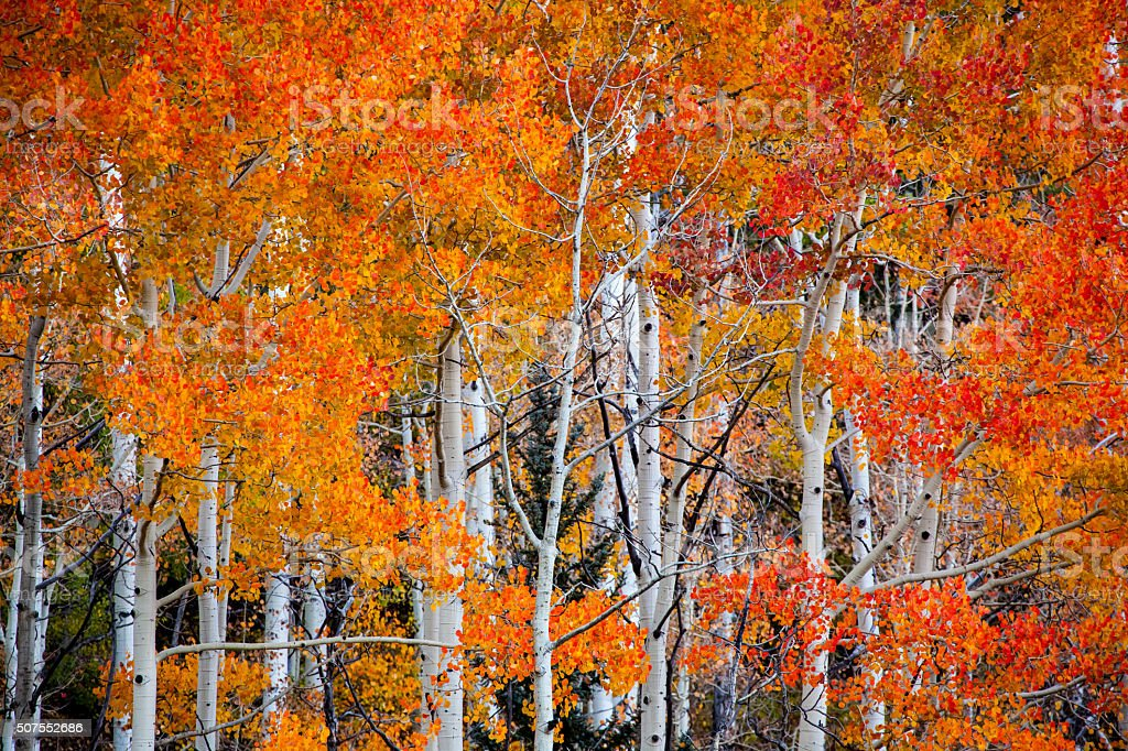 nature autumn landscape trees stock photo