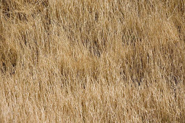 Natureza backgraund - foto de acervo