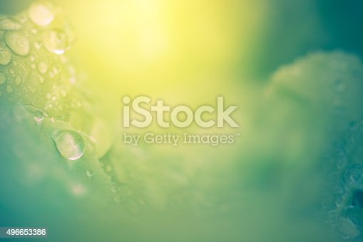 A beautiful and dreamy nature background featuring dew drops of water on green leaves with sunshine. No people in image. High resolution color macro photograph with very selective focus on the water drops. Green and yellow in color, with horizontal composition and copy space.